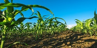 Esenzione Imu ai pensionati soci coadiuvanti di coltivatori